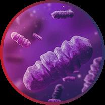 folino-e-gama-icon-doencas