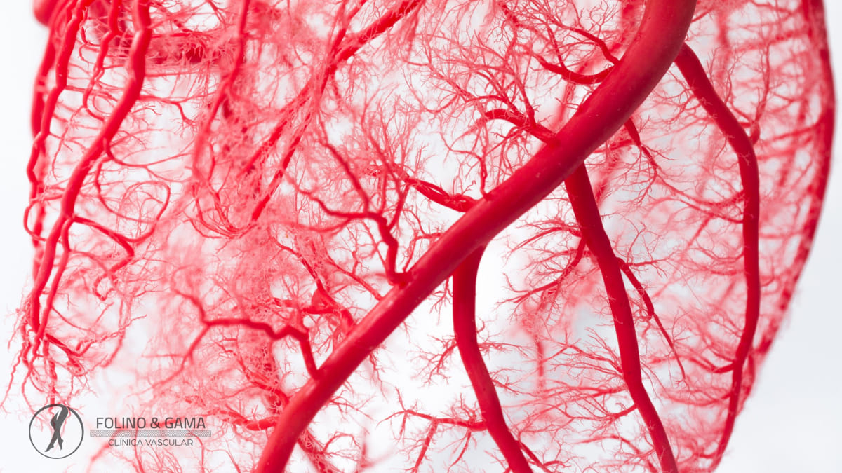 Sistema Vascular
